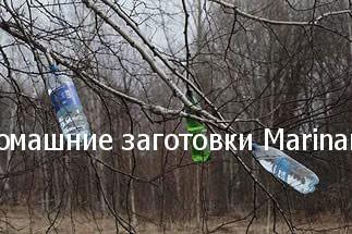 kak-sobrat-berezovyj-sok-bez-vreda-derevu-4