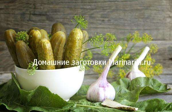 ogurcy-v-xrenovyx-listyax-na-zimu