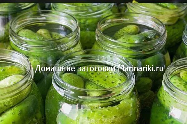 kakie-pryanosti-i-specii-dobavlyat-v-solenye-ogurcy-2