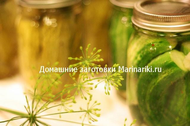 kakie-pryanosti-i-specii-dobavlyat-v-solenye-ogurcy
