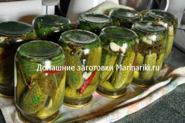 pochemu-vzryvayutsya-ogurcy-oshibki-zasolki-ogurcov-2