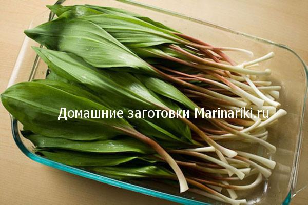 cheremsha-poleznye-svojstva-kogda-i-kak-sobirat-2